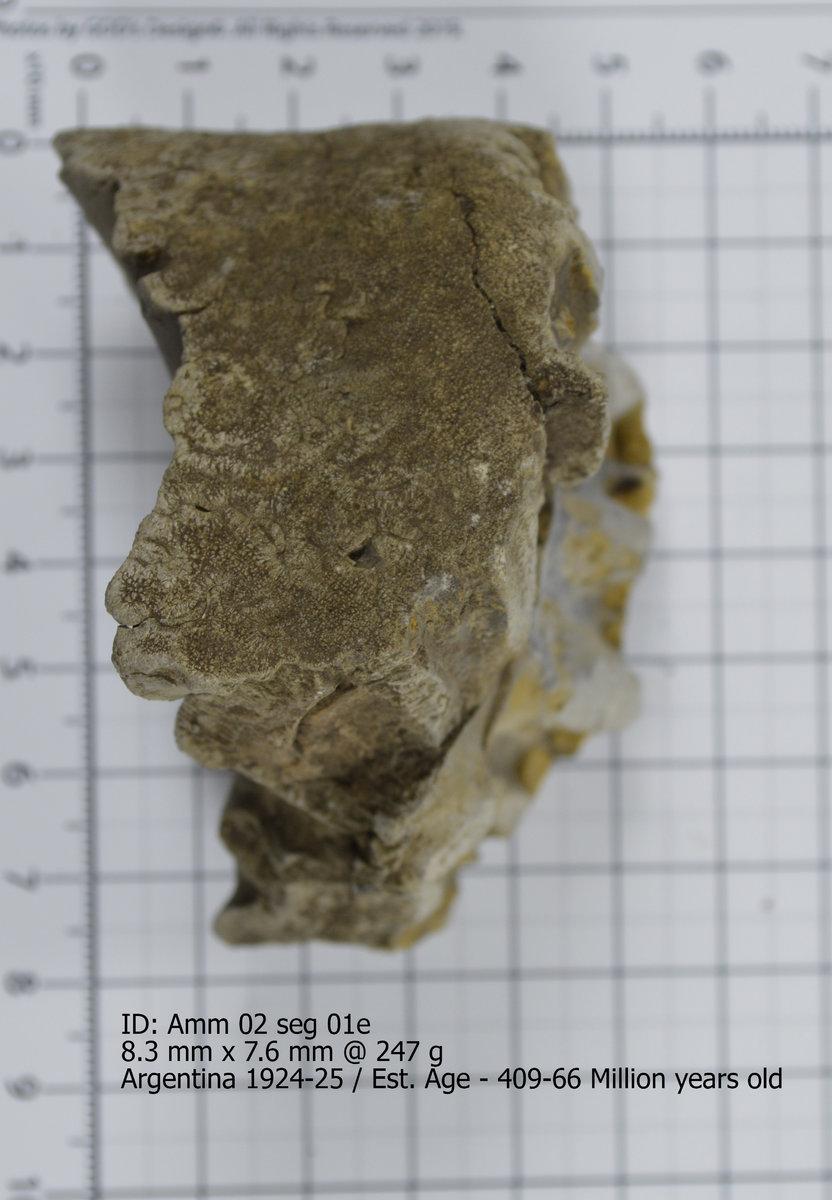 Ammonite 02 seg 01e.jpg