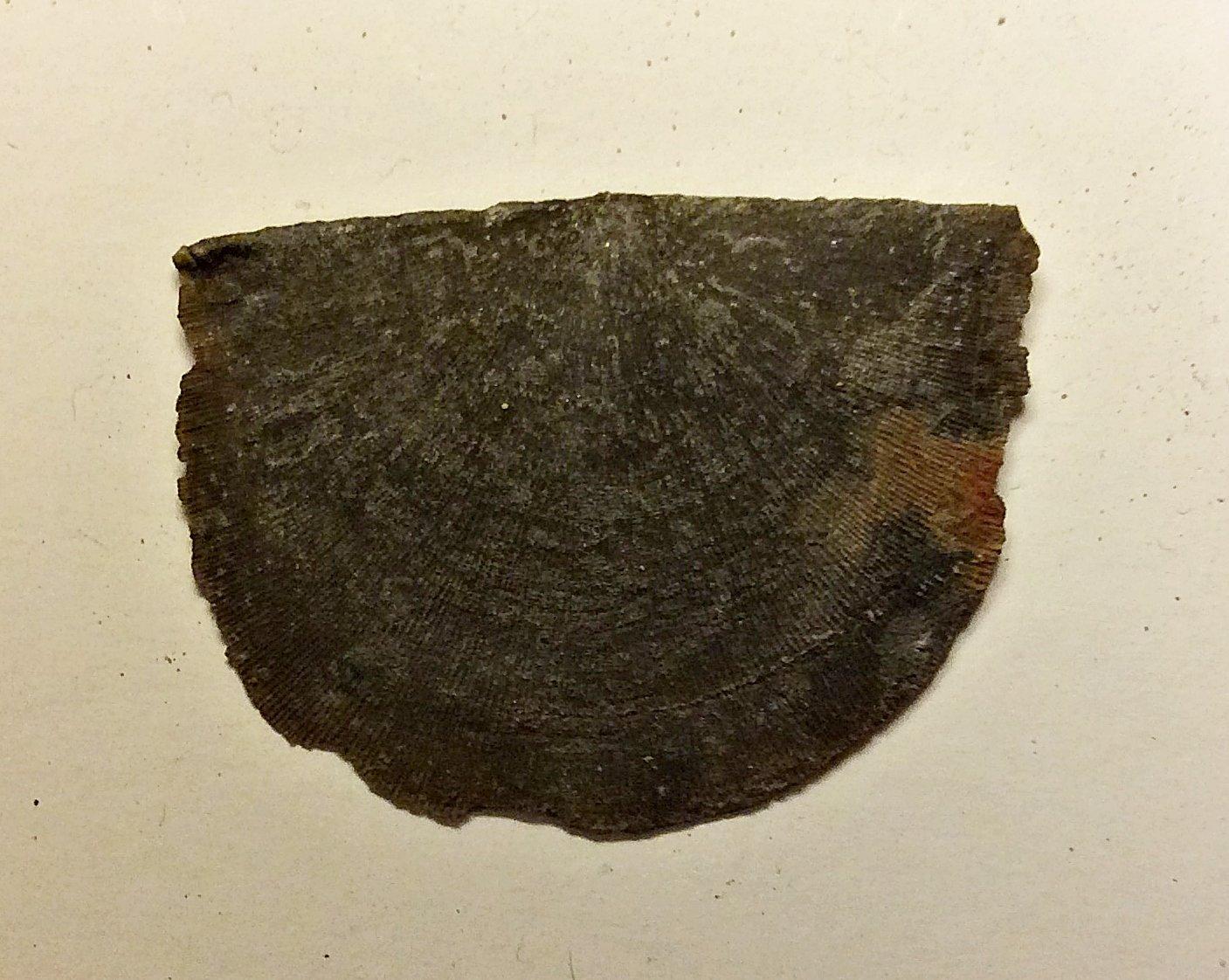 Strophomenid Brachiopod from Deep Springs Road