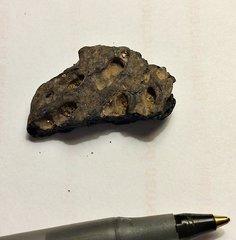 Croc Scute from thr Aquia Formation, Maryland
