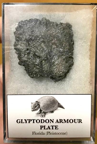 24_glyptodon_armour_plate_by_tyrantking169_ddkvifi-pre.jpg
