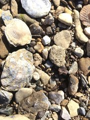 Can you find the shark tooth? (10)