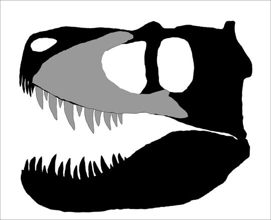 Tyrannosaurid-skull-outlineBC.jpg.8f9aac1e8a281c2e0f4cf205f341fe21.jpg