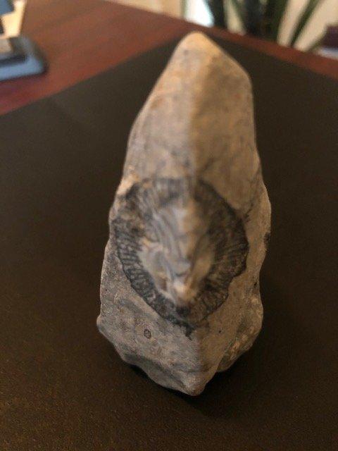 fossil4.jpg