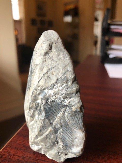 fossil5.jpg