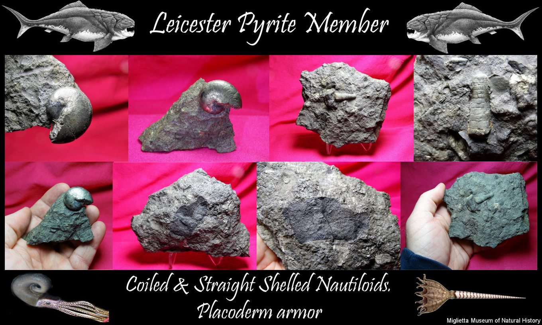 Leicester Pyrite Member..JPG