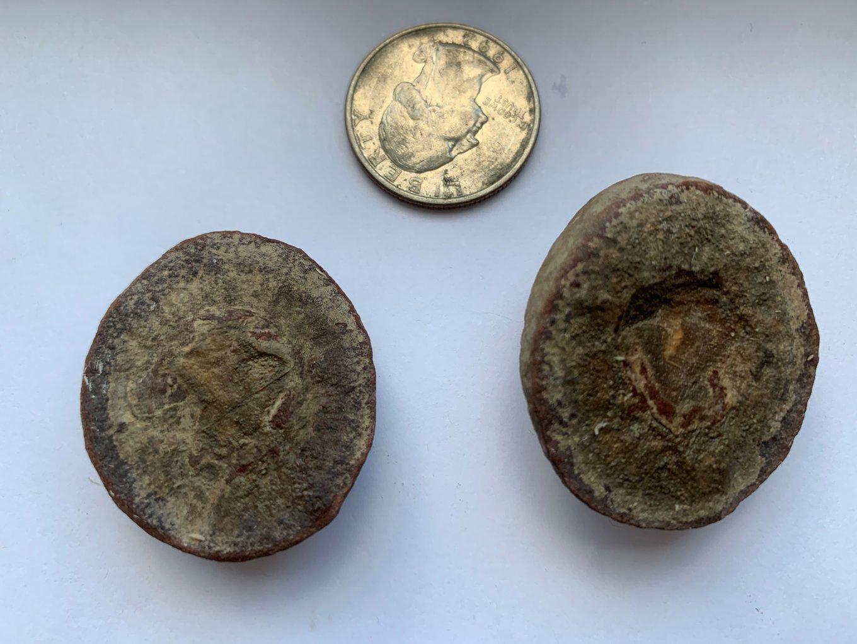 wet fossil.jpg