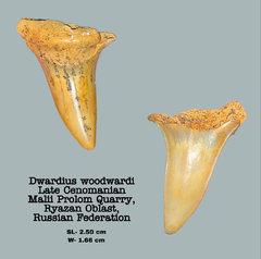 Dwardius woodwardi