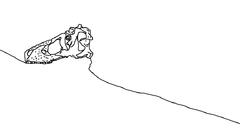 Tyrannosaurus carnegie skull drawing