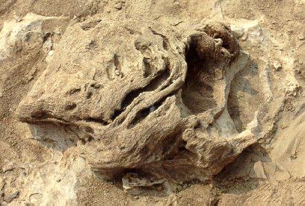 D-Stromatoporoid.jpg