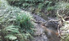 Stream at Luden woods.