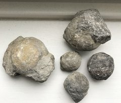 Sponges from the Kalkberg formation