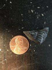 Partial trilobite pygidium