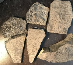 Pieces of rock from the Manlius Formation