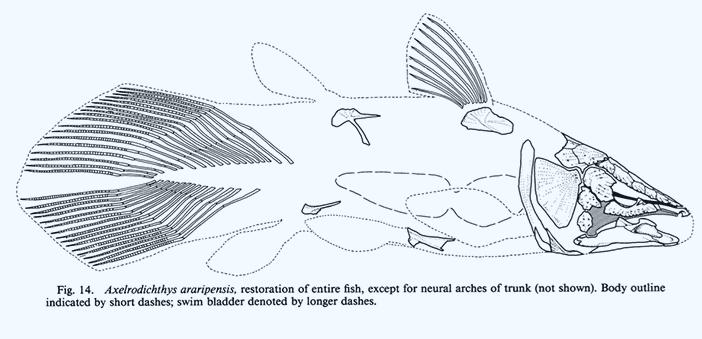 ep3-axelrodichthys-diagram.jpg