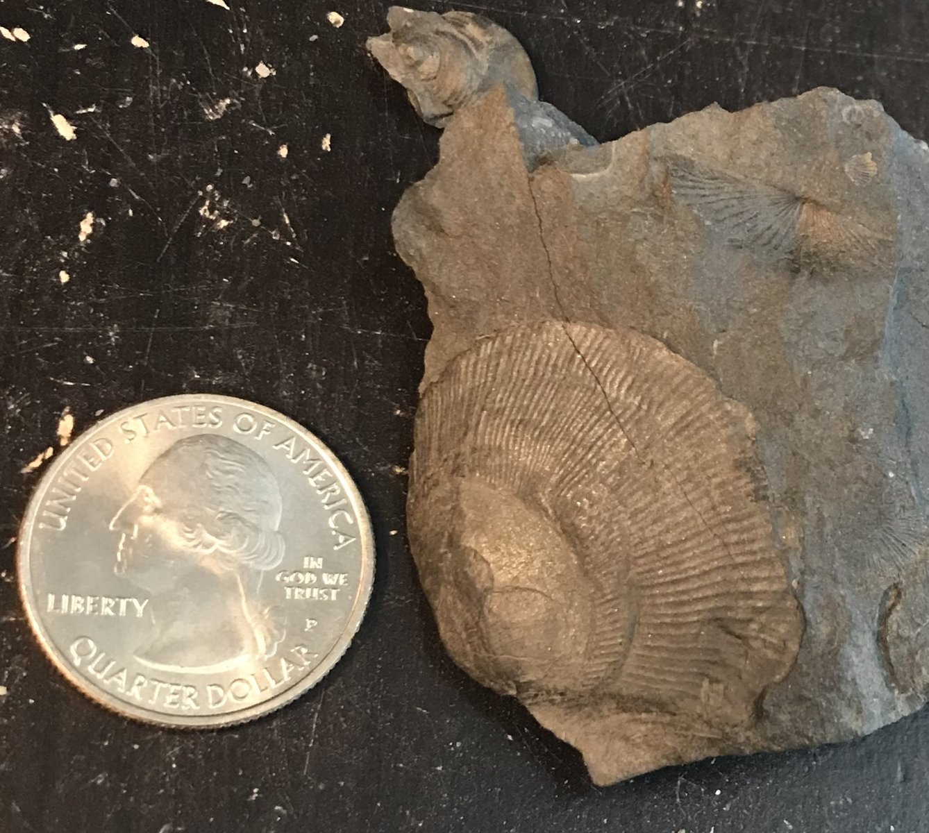Middle Devonian in Central New York