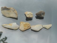 Multiple Petalodus Teeth Fragments
