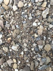 Can you find the shark tooth? (12)