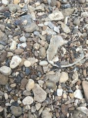 Can you find the shark tooth? (13)