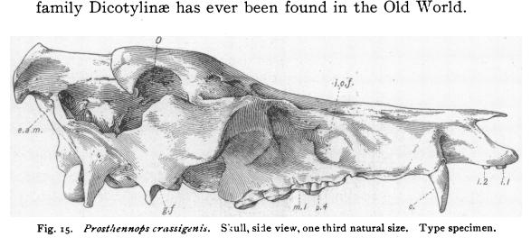 skulll profile.PNG