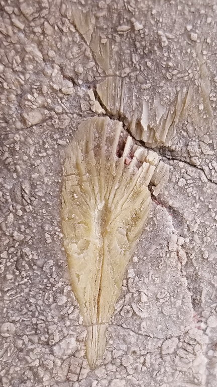 fossil-89a-20201109_124842-1s.thumb.jpg.3af2d3ec8238af00def33c4eae528f0f.jpg