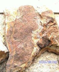 Cretaceous Leaf Fossil