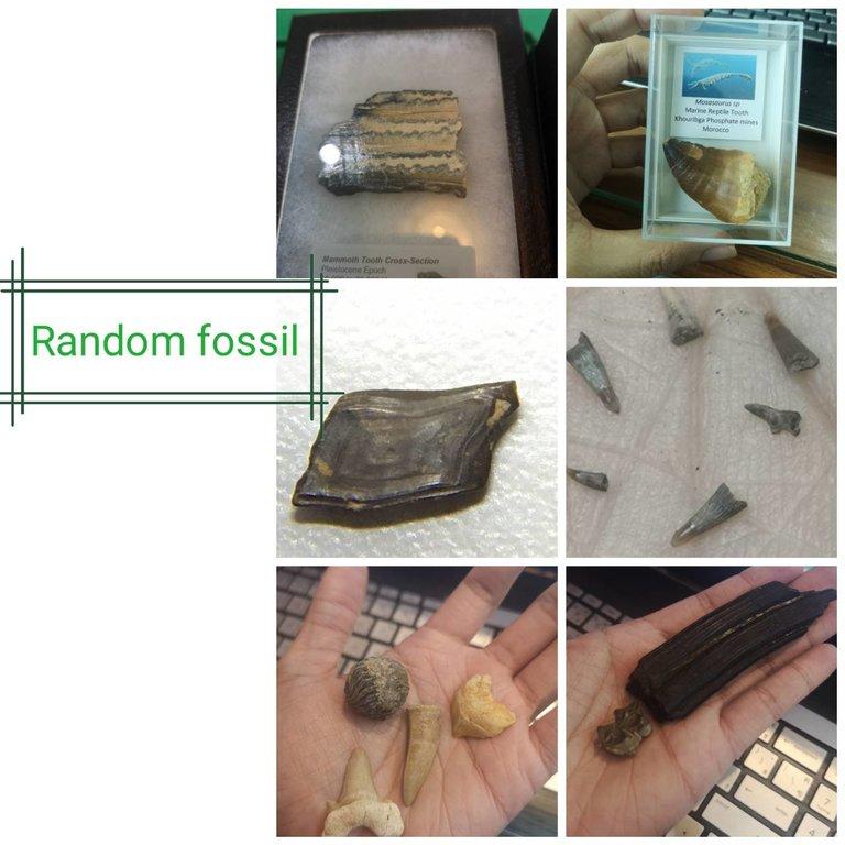 random1.thumb.jpg.b836cb9bdedd771951d7e2fa198000c6.jpg