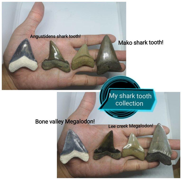 shark3.thumb.jpg.49f1b8e2335de07cfb02cf81d7f5447d.jpg