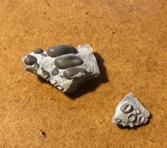Pycnodontid Jaw Plate