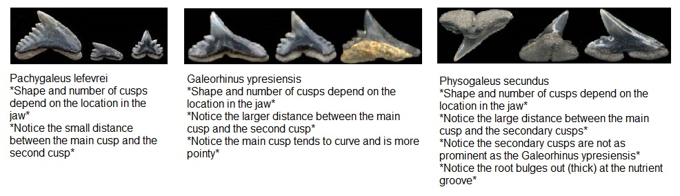 Tooth Comparison.jpg