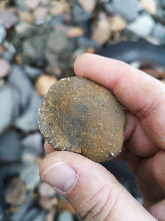 1395236994_Fossil(4of6).thumb.jpg.857b50019232a2a61c9a351cf45a49b5.jpg