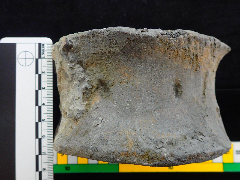Pliosaur vertebra centrum 1c.jpg