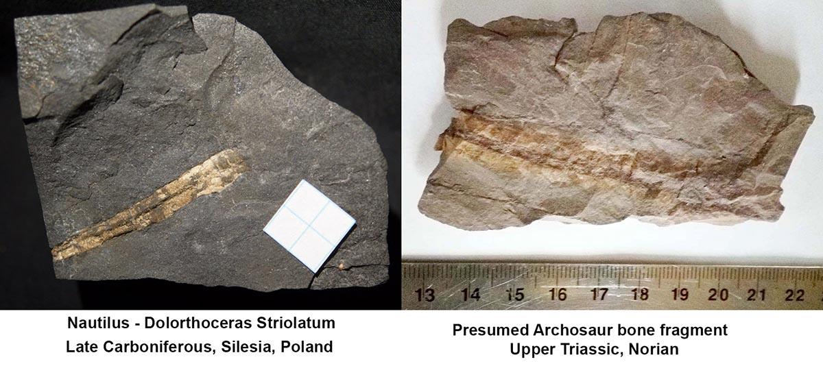 Archosaur bone fragment.jpg