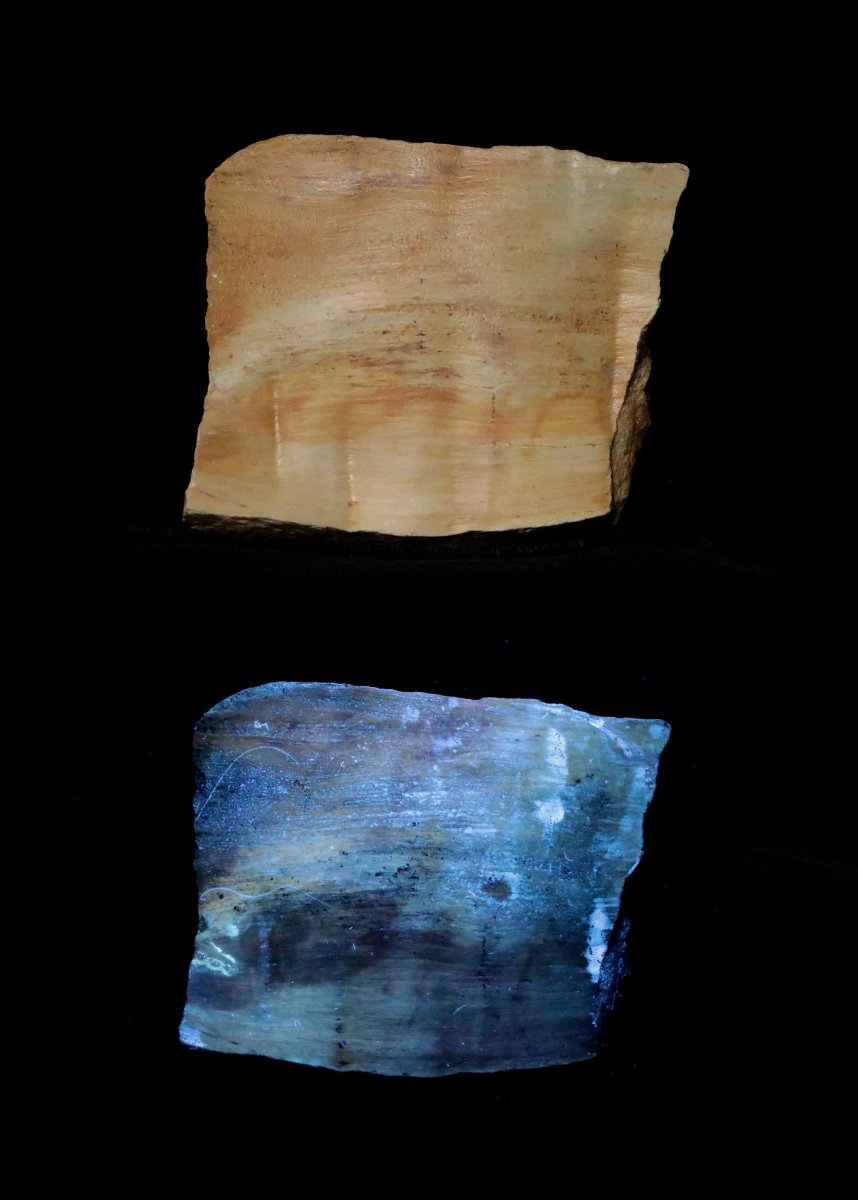 Fluorescent Petrified Wood