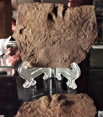 Small Triassic Dinosaur Footprint from New Jersey