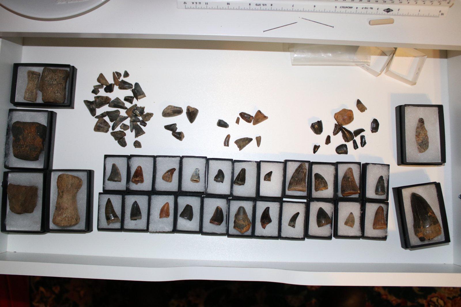 Mosasaur material