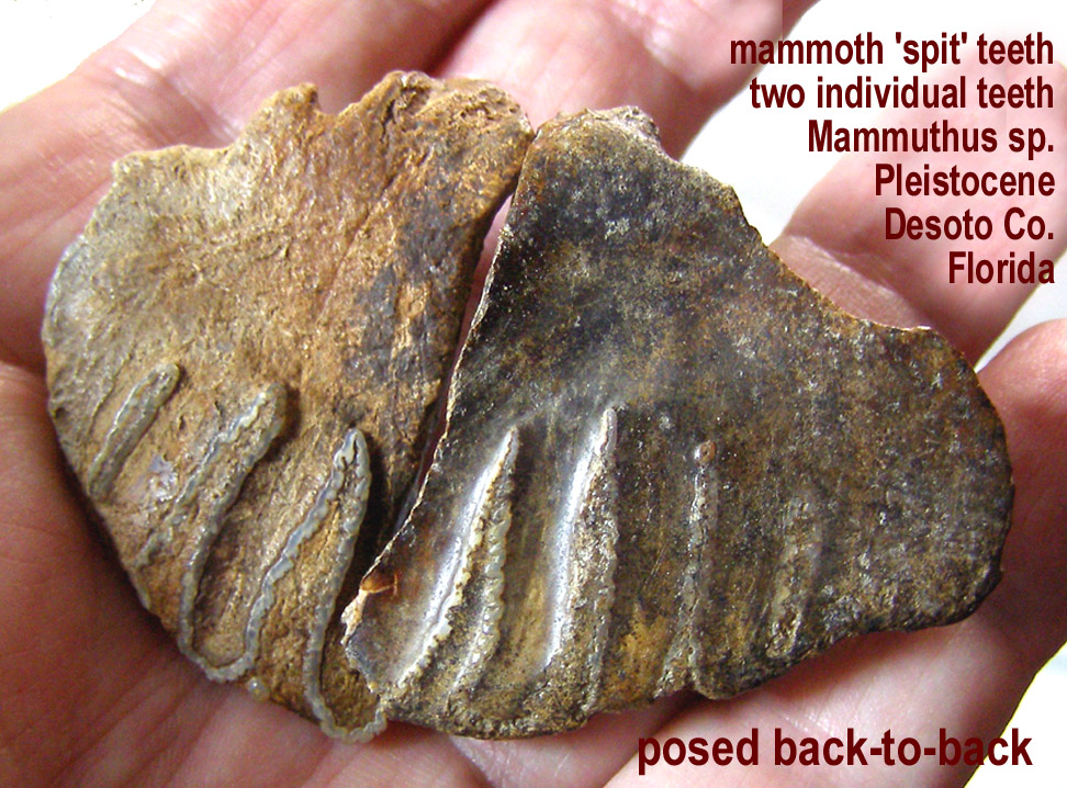 mammoth_spit_smallB.JPG
