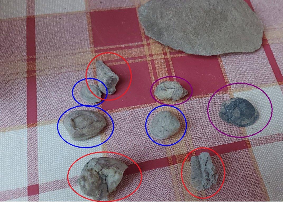 shells.thumb.jpg.9ef225199889e367794b2e7e11fdb4fc.jpg
