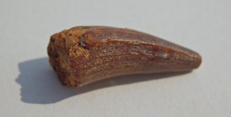 Araripesuchus.jpg.5a9f092730f454d4737a644362877f18.jpg