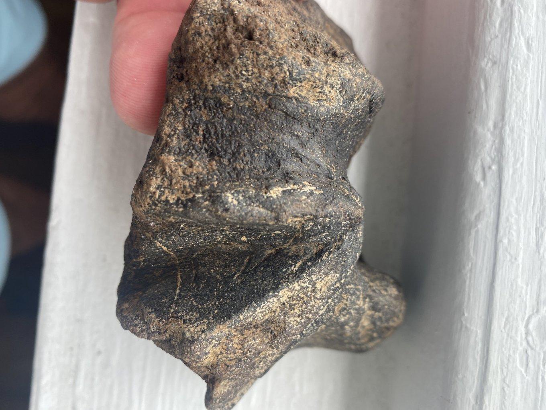 Fossil12.jpg