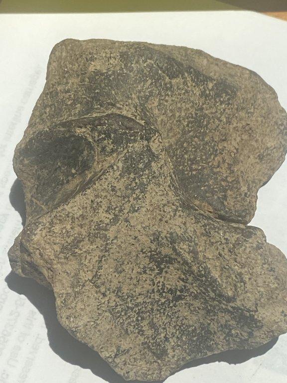 Fossil9.jpg