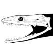 Australian Paleontology