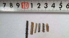 Ulyanovsk  echinoid spines