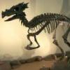 Dracorex_hogwartsia