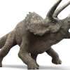 Triceratops77